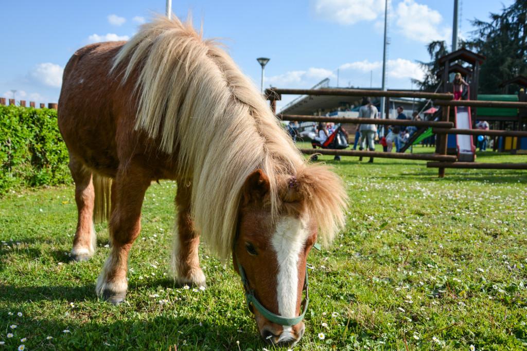 BBQ FESTIVAL - I pony per i bambini