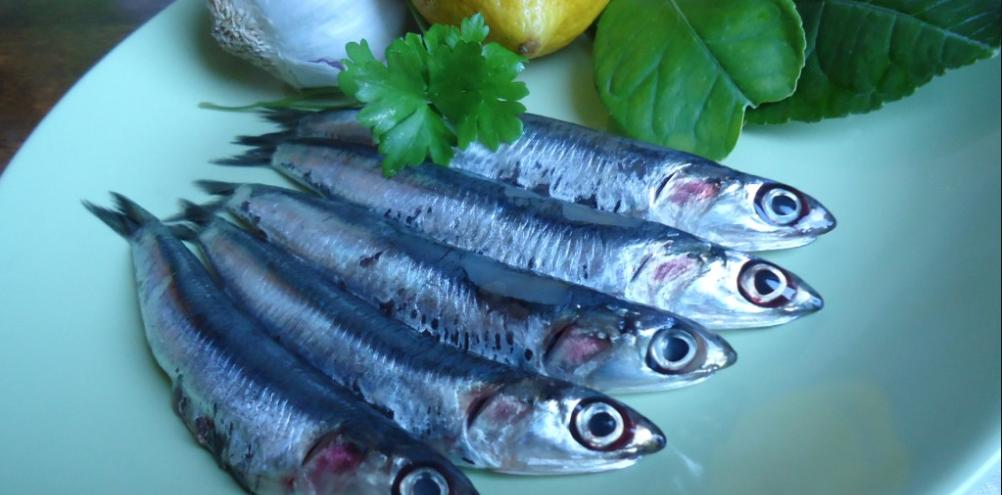 Il pesce azzurro: le alici