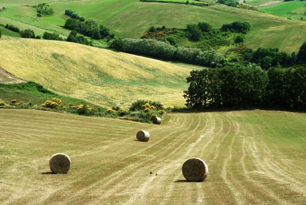 Molisanissimo: countryside