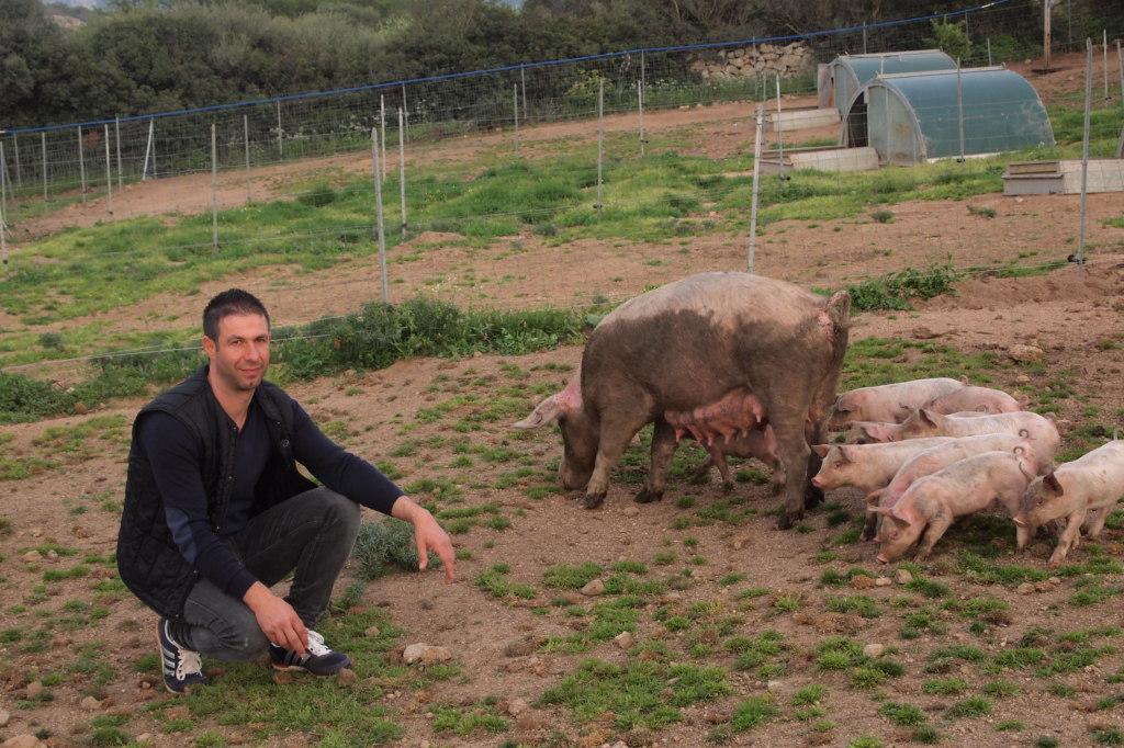 Gallura Pig maiali allo stato brado - Luciano