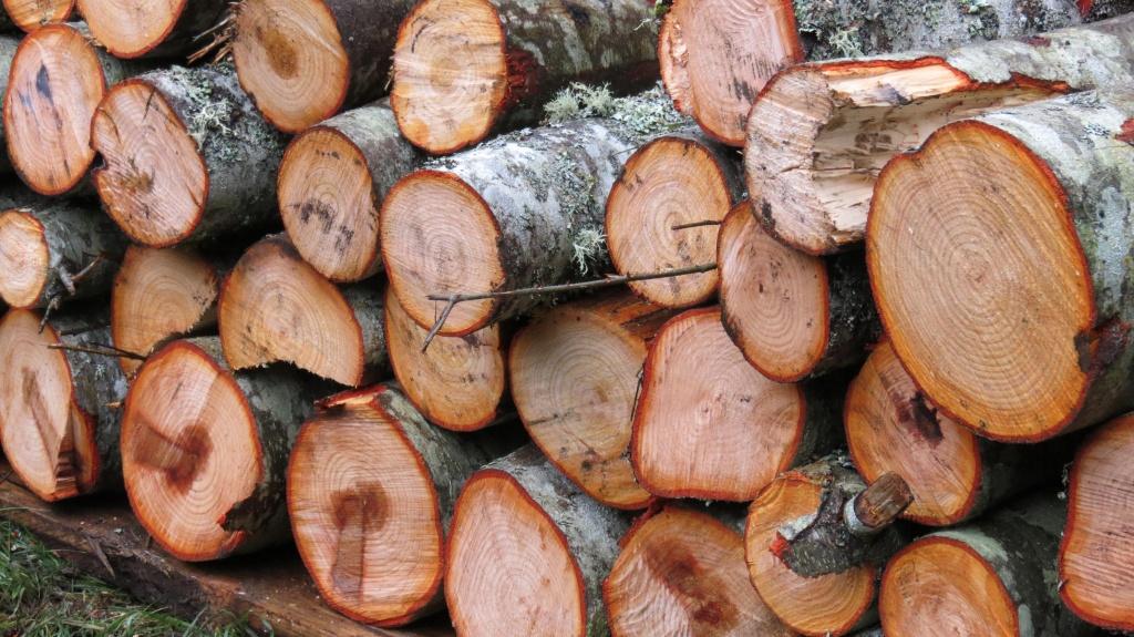Quale legna usare per ardere