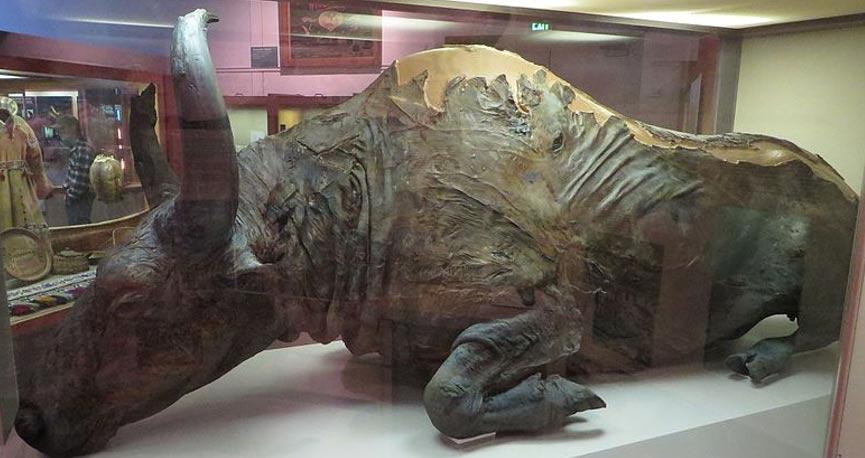 Il bisonte al museo